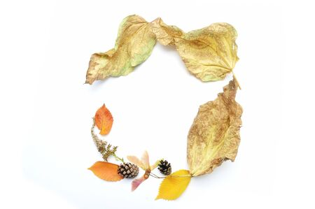 Autumn leaves frame and fall elements with place for your text on white background. Decor for design
