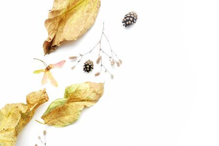 Isolated autumn leaves and plants with place for your text on white background. fall flat lay, top view creative objects. Elements for Thanksgiving day design