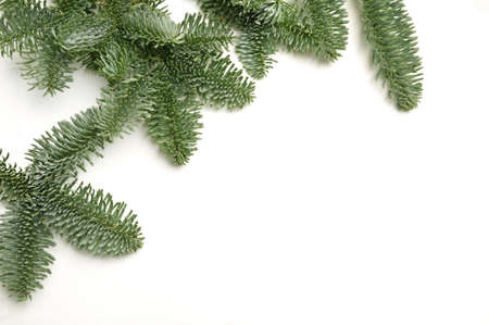 Christmas fir branches with place for your text on a white background isolated. New Year card template