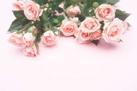 empty pink paper sheet and buds of pink roses, festive background, copy space Foto de archivo