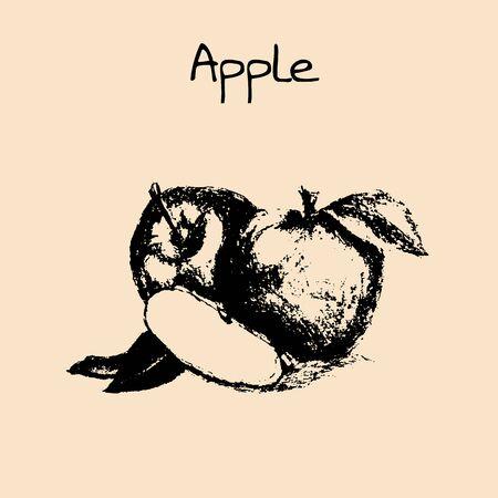 whortleberry: Vector ink hand drawn vintage apple. Vintage fruit illustration isolated on white background. Apple vectorillustration. Healthy food diet.