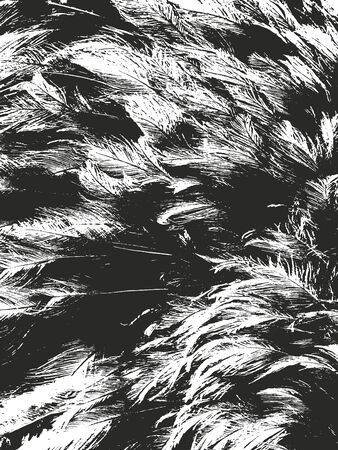 Distressed overlay texture of natural fur, birds feather. grunge vector background. abstract halftone vector illustration