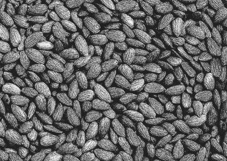 Distressed overlay texture of almond, nuts. grunge black and white background. abstract halftone vector illustration