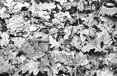 Distressed overlay wooden leaf macro texture with streaks.