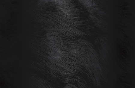Luxury black metal gradient background with distressed natural fur texture.