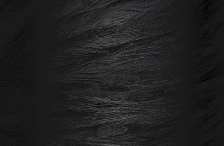 Luxury black metal gradient background with distressed birds feather texture. 免版税图像