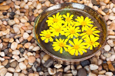 Floating yellow daisies on a pebble background Stock Photo - 8064986