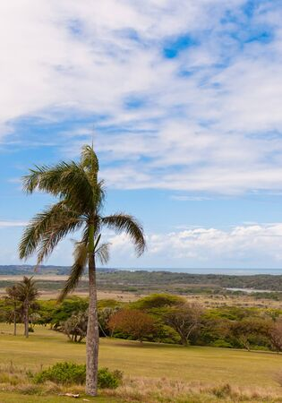 Ocean view with palm tree in Mtunzini, South Africa photo