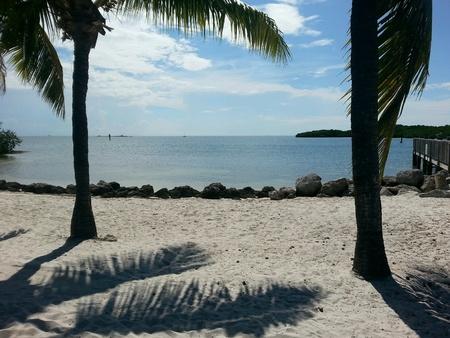 Palm trees and beautiful beach Stock fotó - 35305201