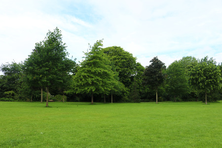 Summers day in park with trees Stock Photo - 81646646