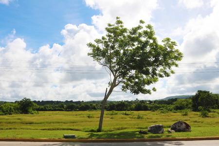 Cuba Holguin tree Stock Photo - 92814419