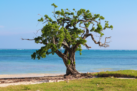 Tree by the coast in Cuba Holguin Stock Photo