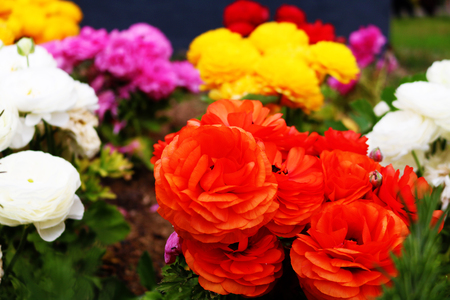 Colourful Flower selection Stock Photo - 100013036