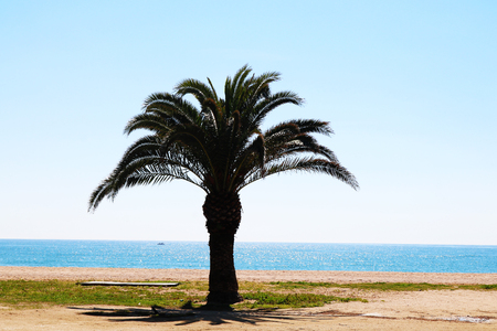 Palm tree on the beach in spain