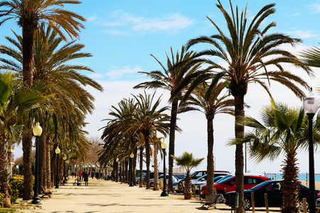 Palm tree path in spain Stock Photo