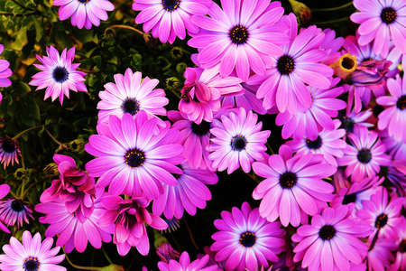 Purple flowers close up Stock Photo - 99599478