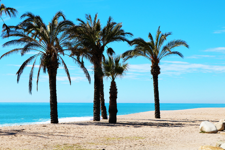 Spain beach pine de mar palm trees Stock Photo