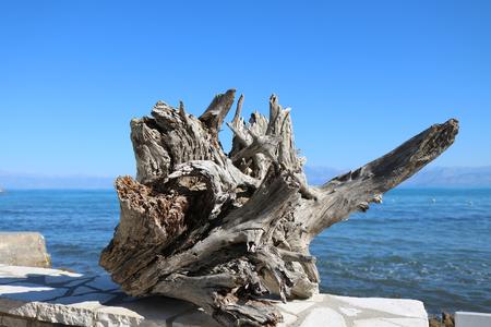 Greece Corfu tree bark sea front