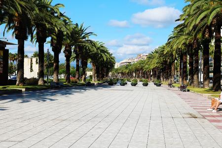 palm tree pavement