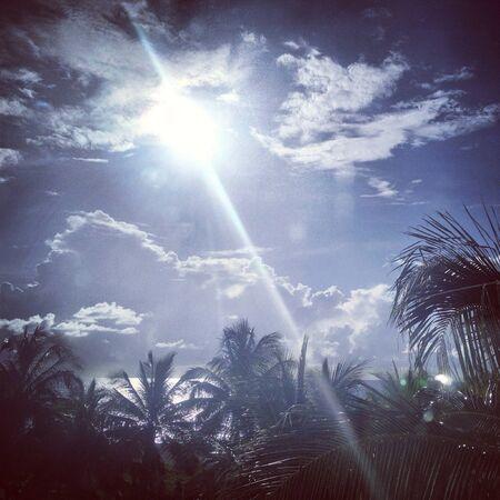 sun shine  palm trees Zdjęcie Seryjne - 20824913