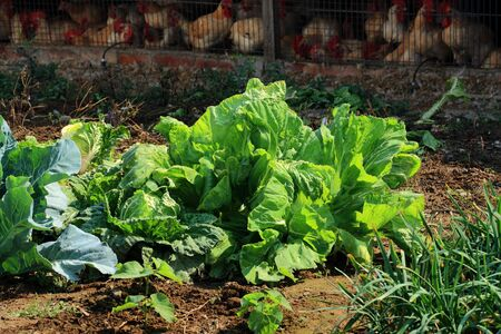 Organic vegetable by natural farming Stock Photo - 8924076