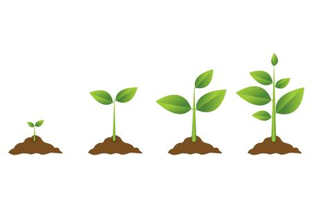 Growing plant process. Planting tree infographic. Vector illustration in flat style