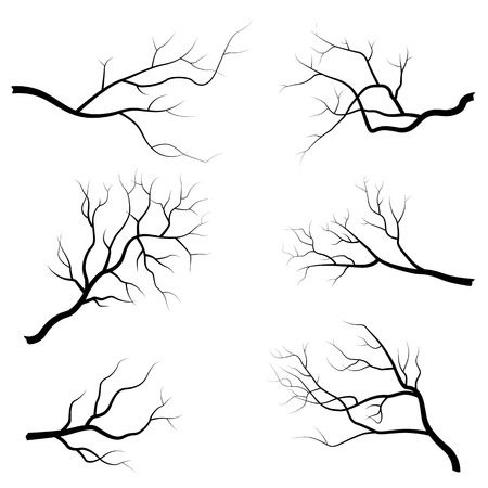 Tree branch vector illustration isolated on white background. Flat design Vektorové ilustrace