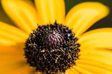 black textured background: yellow flower macro Stock Photo