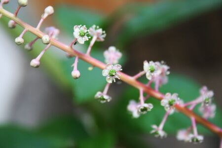 Tiny white and green flowers on pink stem Stock Photo - 3283219