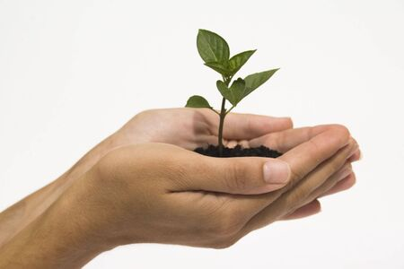 Hands holding young plant against white background Stock Photo