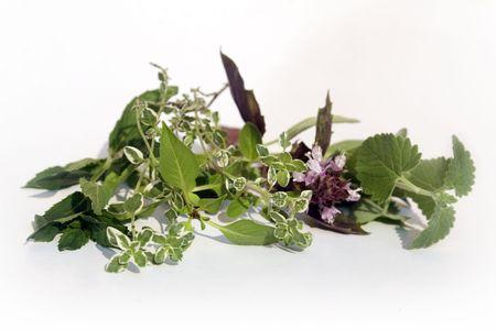 Catnip, red basil, lemon thyme, thai basil, and mint Stock Photo - 3598079