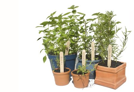 Basil, mint, thyme and lavender potted herbs in line and isolated against white Stock Photo