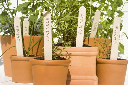 Mint, chives, lavender, rosemary, basil and thyme fresh herbs in terracotta pots Stock Photo