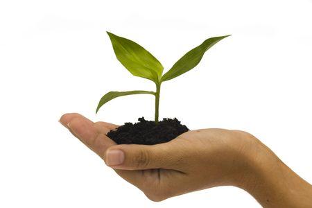 Hand holding jonge plant tegen een witte achtergrond Stockfoto