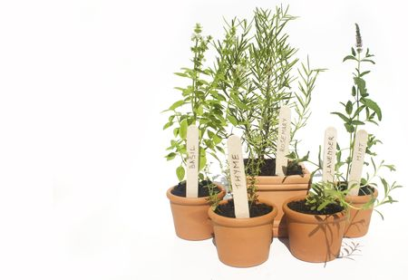 labeled: Basil, mint, lavender, rosemary and thyme potted herbs isolated against white