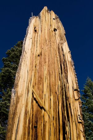 Tall decaying tree on side of mountainous hill photo