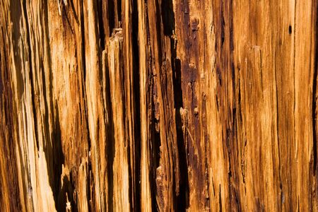 Close up of wood grain of decaying tree
