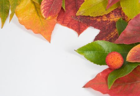 Assortment of leaves isolated on white in a frame with ad space in lower left