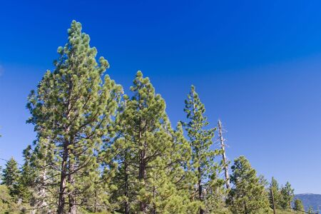 Lush trees against blue sky in mountains photo