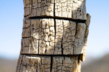 withering: Fire damaged tree trunk detail
