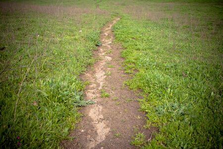 Moody Bild der Fuß-Pfad in die Ferne, hellen grün Gras auf beiden Seiten verschwinden Standard-Bild - 6523869