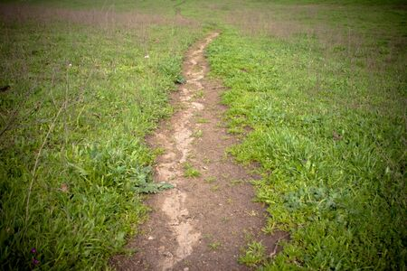 moody image of foot path vanishing into the distance, bright green grass on both sides