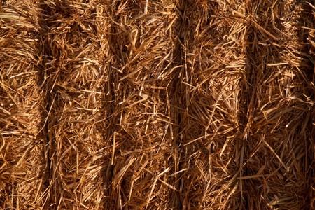 Bundled block of hay closeup Stock Photo - 7749780