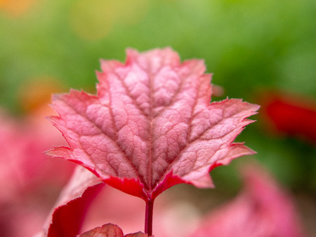Red leaf on green background