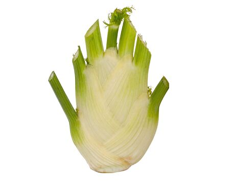 Fennel: vegetable, herb and spice