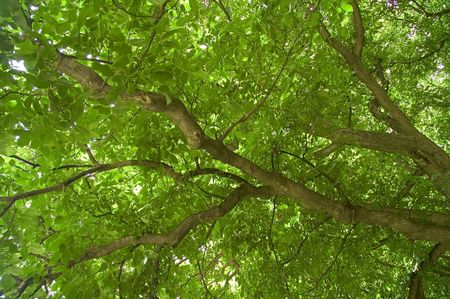The Cooling, refreshing and relaxing cover of a dense tree canopy offering shade from the sun Stock Photo