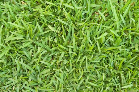 Close up full frame view of broad-leaved grass