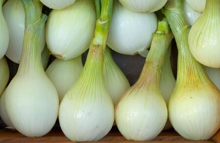 Fresh White slad onions in Market Stock Photo