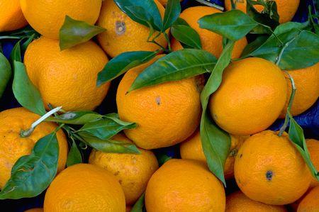 Fresh oragnic market Oranges