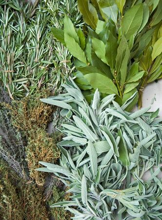 Fresh Home grown herbs in market (rosemary, bay, thyme)